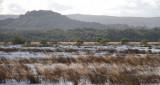 Crom Mhin Marsh - Loch Lomond NNR