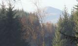 Ben Lomond from Garadhban Forest
