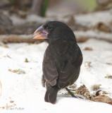 Galapagos - Just Birds