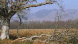 Conic Hill and Gartfairn Marsh, Loch Lomond