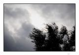 Wind before the rain