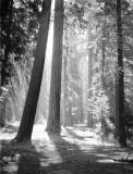 Sequoia Natl. Monument,CA
