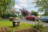 Family Yard and Neighborhood, July 10 2011