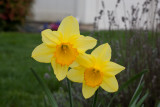 Spring And More! Apr 8 2012