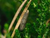 Amphisbatidae