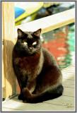 Les chats de Burano  106.