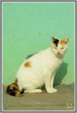Les chats de Burano  107.