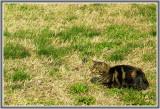 Les chats de Burano  108.
