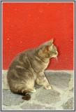 Les chats de Burano  109.