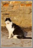 Les chats de Venise 110.