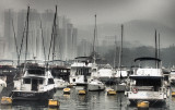 foggy morning in the Harbour