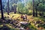 Forest, McLeod Ganj