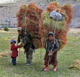 Collecting grass, Kormoch