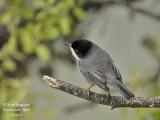 OTHER BIRD SPECIES SEEN IN EXTREMADURA