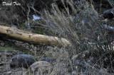 Dead Tree in wild