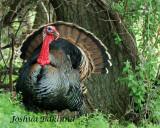 Eastern Turkey 2