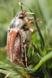20110501 - It Bugs Me...