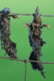 20110502 - Moles