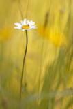 20120528 - Daisy