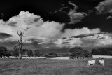 20120807 - Under a Cloud