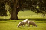 20120816 - Morning Tree-o