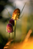 20120828 - Spiky