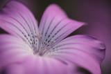 20120908 - Flower