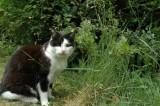 Ragna in our garden.jpg