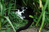 in a roll in the garden.jpg
