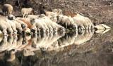 Schäfchen zählen / counting sheep