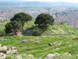 The Altar of Zeus