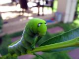 Little Green Cocoon 02