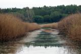 Canal Roberts Road IMG_5583.jpg