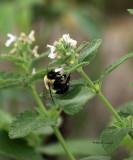 Iced Bee IMG_9515.jpg
