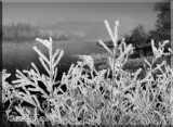 Hoar Frost Number Two