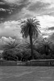 A Palm in Otoranto