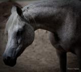 New Mexico ~ Horse