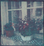 Red Pot White Pot  (Tri-color gum)