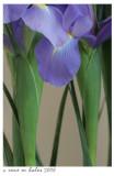 Iris Time