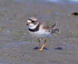 ocean_birding