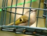 yardbirds_fircrest
