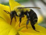 Bees, bees knees, wasps