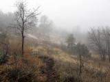ARIZONA - WOODCHUTE WILDERNESS - WOODCHUTE MOUNTAIN