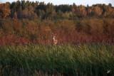 IMG_9696 Fall Deer at Big Lake Sept 20