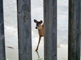 2011_12_03 Webcam Deer and Platform images from Elke