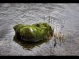 Stone with moss