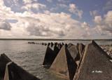 Triangulation Along The Coast