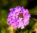 Purple flower with bug on board