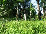 Cmentarz Tunicki w Krzemieńcu(IMG_8308.jpg)