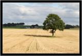 110902 - My Tree